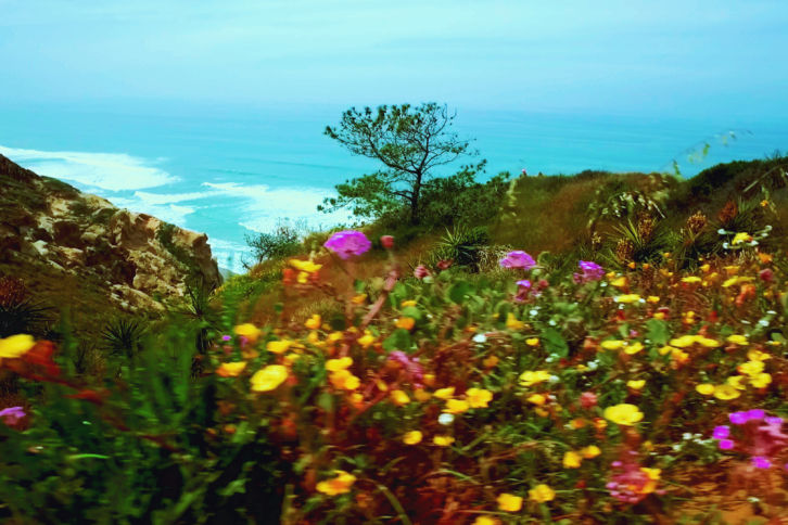 A View From Torrey Pines In The Spring